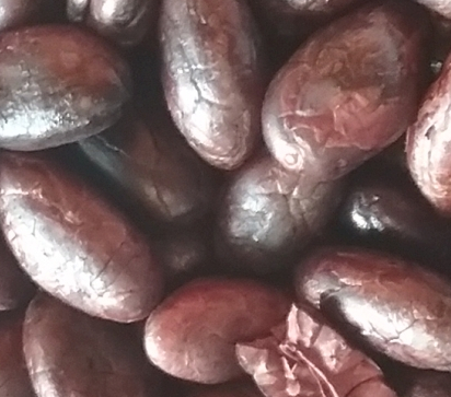 closeup of hand shelled cocoa beans